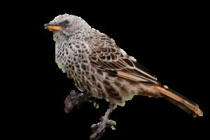 Michigan Sparrow