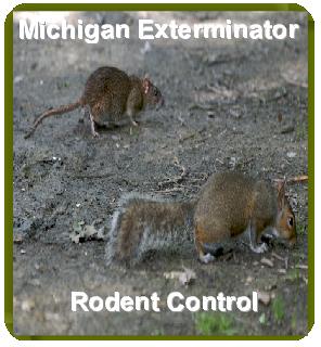 Rat and Squirrel