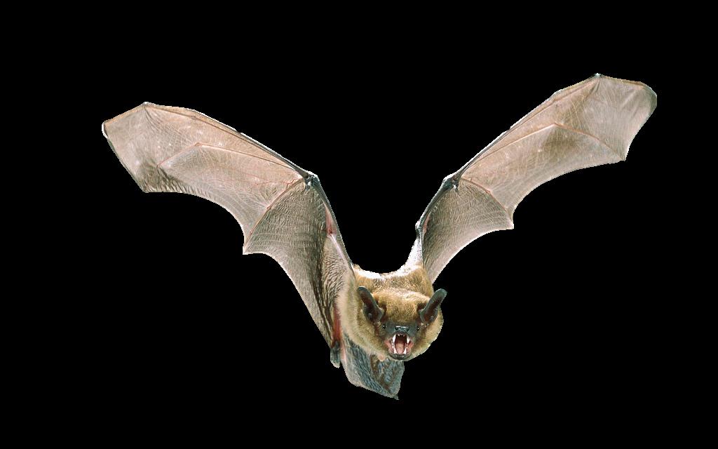Michigan Wildlife Solutions Bat Services
