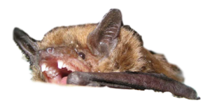 Michigan bat remocal cost
