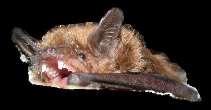 Michigan Bat Removal Company