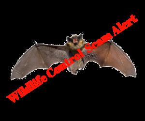Michigan Wildlife Control Scam