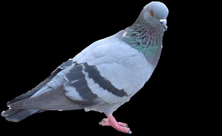 Bird Control Company