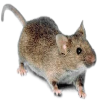 Poison free mice control services in Michigan